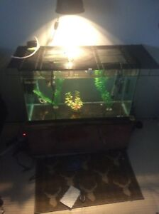 Looking for a large fish tank