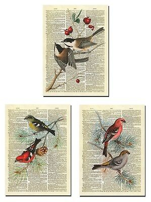 Altered Artichoke Bird Art Dictionary Prints Set of 3 Wall Art Prints