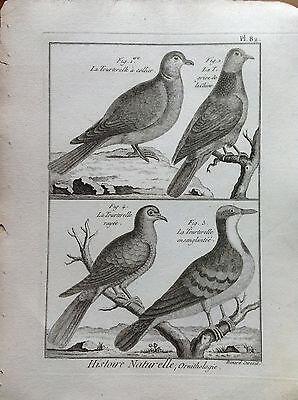 Tortorella to Necklace Etching 1790 Histoire Naturelle Ornithology Birds