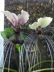 Rare Jungle Plants