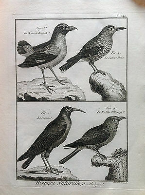 Short Bengal Nutcracker Benard 1790 Histoire Naturelle Ornithology Birds