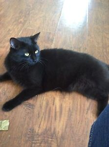 Female Black Cat Looking for Fur-ever home