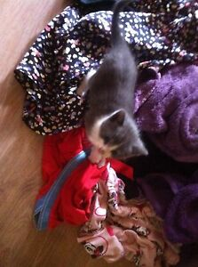 Kitten for free Moulden Palmerston Area Preview