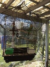 Male Ringneck and cage Boronia Heights Logan Area Preview