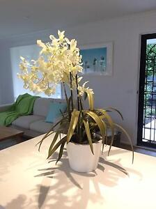 Artificial Orchid Rye Mornington Peninsula Preview