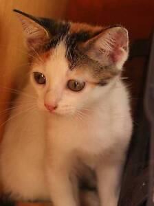 Noni - the adorable kitten Mascot Rockdale Area Preview