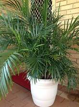 Pot Plants For Sale Morley Bayswater Area Preview