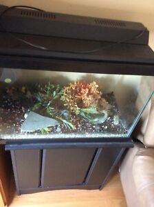20 gallon Aquarium plus cabinet stand