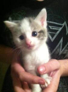 kittens for sale two girls one boy Marsden Logan Area Preview