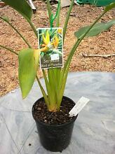 Pot plants 12cm Bendigo Region Preview