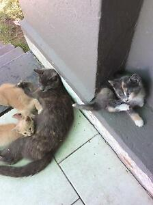 4 KITTENS FREE TO LOVING FAMILIES Auburn Auburn Area Preview