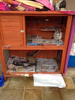 2 x dwarf rabbits & hutch & accessories rp$300+ Balwyn North Boroondara Area Preview