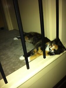 5 year old cat free to good home Narre Warren South Casey Area Preview