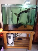 Turtle and tank set up Burpengary Caboolture Area Preview