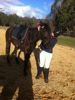 Trail riding and endurance horse