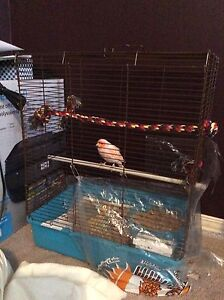 Male singing canary with cage for sale