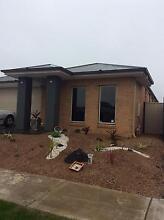 Room for rent. Mernda Whittlesea Area Preview