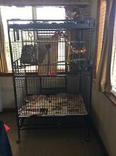 Adult pair of nanday conures Burnie Burnie Area Preview