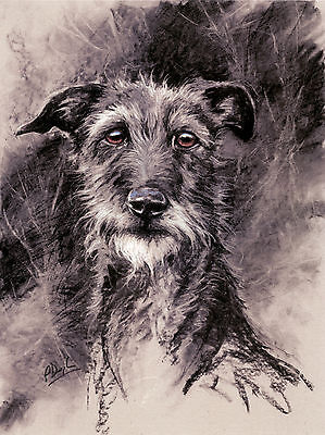 LURCHER DEERHOUND SCOTTISH DOG FINE ART LIMITED EDITION PRINT - by Paul Doyle