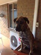 Dog Burton Salisbury Area Preview