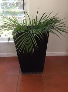 Pots black 700mm x 400mm Smithfield Cairns City Preview