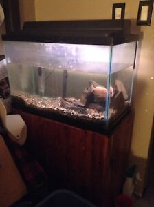 Fish tank and everything