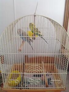 2 young budgies and cage Medowie Port Stephens Area Preview