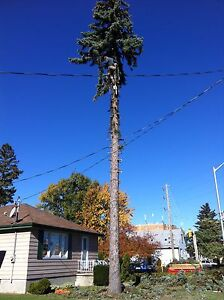 Tree removal services  London Ontario image 4