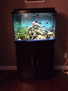 36 Gallon Bow front Fish Tank and Fish for sale!