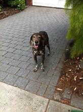 Quiet gardener, looking for home with my female pooch Edithvale Kingston Area Preview