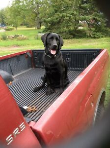 Black Dog Trucking