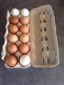 Farm Fresh Eggs-$3.50