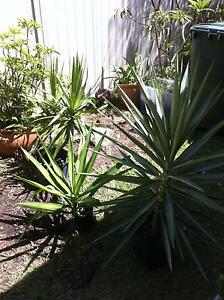 PLANTS for Sale Currumbin Waters Gold Coast South Preview