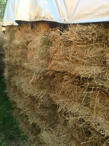 Square hay bales for sale