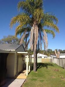 Palm trees Blackalls Park Lake Macquarie Area Preview