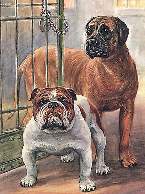 MASTIFF AND BULLDOG GREAT DOG GREETINGS NOTE CARD