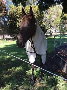 FAMILY MAN - QH x Stockhorse Cairns Cairns City Preview
