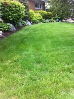 Lawn Cutting and Mainenance