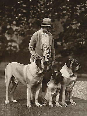 MASTIFF LADY AND HER DOGS OLD DOG PHOTO ON  GREETINGS NOTE CARD
