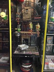 Bonded pair of cinnomen conures and cage,stand Erowal Bay Shoalhaven Area Preview