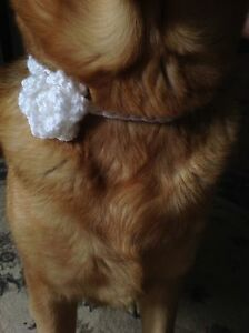Made by order crochet dog flower ties