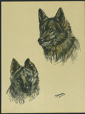 NORWEGIAN ELKHOUND LOVELY VINTAGE 1930'S DOG ART PRINT by KF BARKER