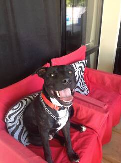 Is Jett your new best friend? Pelican Waters Caloundra Area Preview