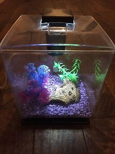 1.5 gallon cube  betta tank with LED light and filter