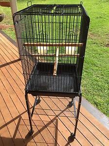 Bird cage Cabarlah Toowoomba Surrounds Preview