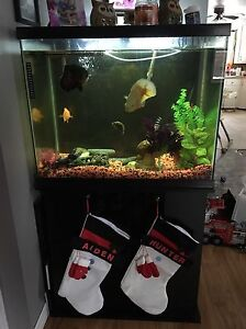 55 gallon fish tank with fish and accessories