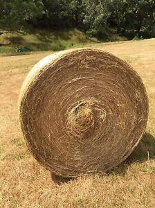 Lovely GRASS HAY ROUND BALES $65 Suit horse and cattle Narre Warren Casey Area Preview