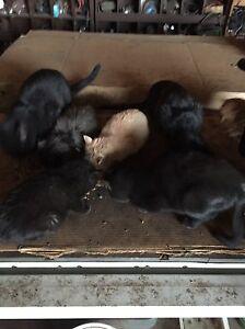 Free kittens  Edmonton Edmonton Area image 2