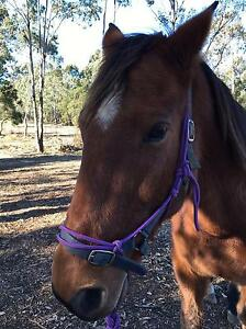 9 year old Standard Bred gelding Tahmoor Wollondilly Area Preview