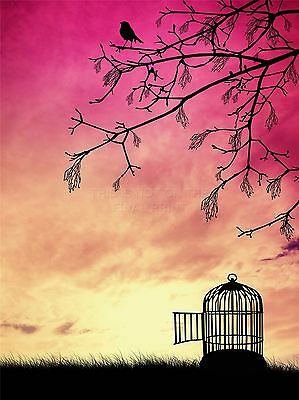 ART PRINT POSTER PAINTING DRAWING BIRD CAGE FREE TREE BRANCH SUNSET LFMP0576